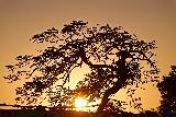 Immagine sembra Albero fantastico che sembra piegato al tramonto