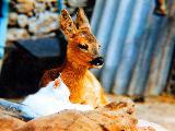 Immagine compagnia Animale molto tenero in compagnia