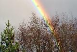 Immagine spesso Arcobaleno spesso al di là degli alberi