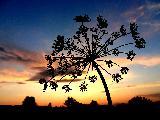 Immagine bella Bella pianta che sembra una girandola