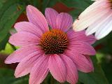 Immagine fiore Bellissimo fiore con petali rosa