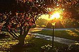 Immagine parco Bellissimo parco con albero e lampione al tramonto