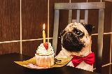 Immagine compleanno Compleanno romantico per un cane a tavola con un muffin e una candelina