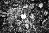Immagine terra Cuore a terra che si confonde tra le rocce