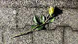 Immagine fiore Fiore su muretto che esprime romanticismo