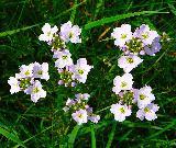 Immagine sempre Fiorellini bianchi comuni ma sempre belli da vedere