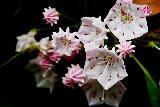 Immagine raggi Fiori insoliti bianchi con raggi rossi