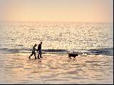 Immagine meravigliosa Insieme al mare con cane e sabbia meravigliosa