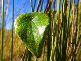 La dolcezza della natura in una bella foglia verde