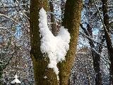 Immagine mezzo Neve a forma di cuore in mezzo ad albero