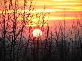 Immagine visto Sole basso al tramonto visto attraverso alberi rinsecchiti