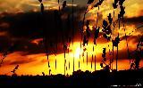 Tramonto con cielo arancione tra erba e frasche