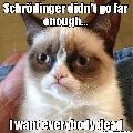 Immagine tutti Vendicativo gatto di Schrodinger che vuole la morte di tutti